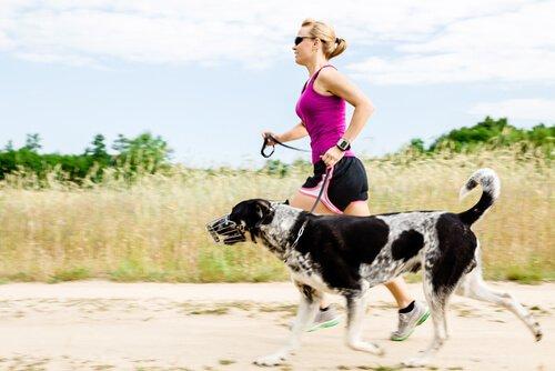 Auslauf für Hunde: welches ist das richtige Maß?