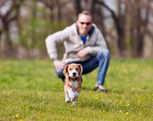 Wie du verhinderst, dass dein Hund bei einem Spaziergang wegläuft