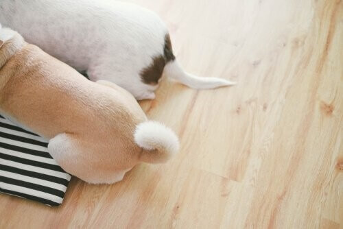 Was der Schwanz deines Hundes kommuniziert