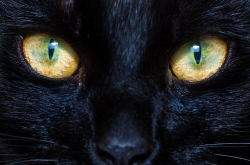 Funktionsweise der Pupillen bei Hunden und Katzen