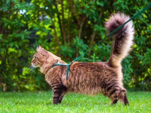 Die Sprache des Katzenschwanzes