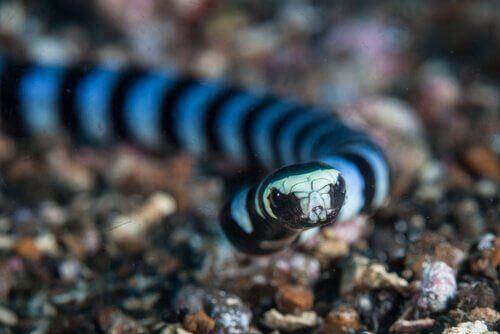 Die tödlichsten Raubtiere: Seeschlangen