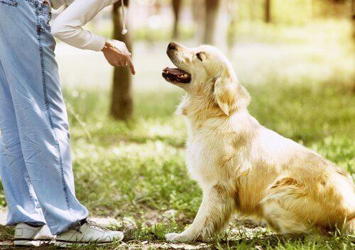 Fehler bei der Hundeerziehung