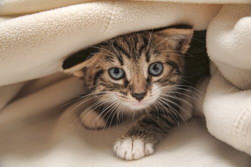 Fehler bei der Katzenerziehung