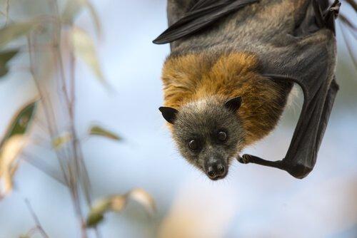 Fledermäuse retten und wieder aussetzen