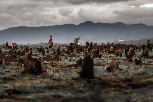 Gefahren und Umweltzerstörung aufgrund von Palmöl