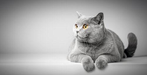 Die Körpersprache von Katzen