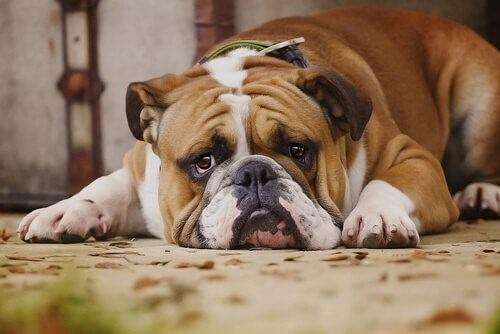 Hunde hassen diese 7 Dinge