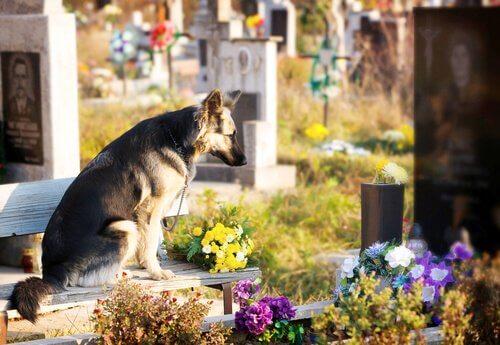 Hund an Herrchens Grab