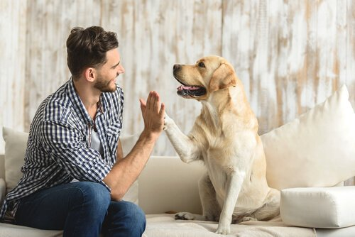 Hund und Mensch geben sich die Tatze