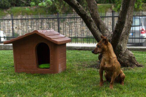 Hund vor seiner Hütte