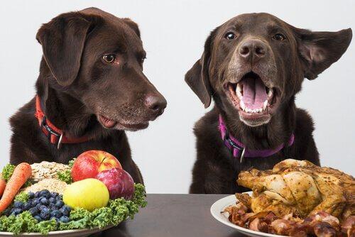 Kann ein Hund Veganer sein?
