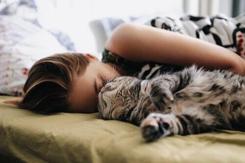 5 Dinge, die du bedenken solltest, bevor du die Katze im Bett schlafen lässt