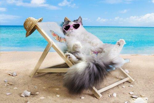 Katze im Urlaub