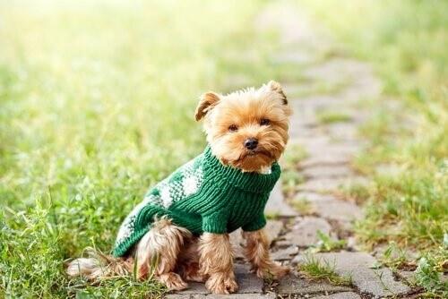 Kleine Hunde haben viele Vorteile!