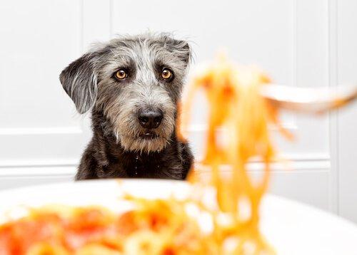 Dürfen Hunde Nudeln fressen?