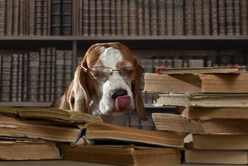 Kuriositäten über Hunde: können pessimistisch sein