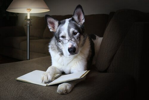 Kuriositäten über Hunde: soziale Fähigkeiten