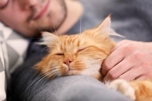 Mann hat Katze im Arm