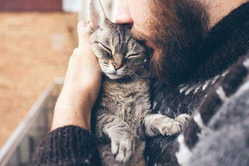 Mit Katzen anfreunden und streicheln