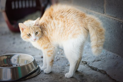 Mit Katzen anfreunden: Warnsignale beachten