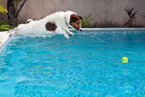 Mit Welpen im Pool spielen