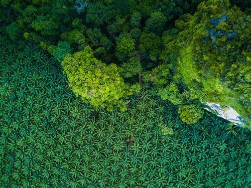 Monokultur bedroht hunderte von Tierarten
