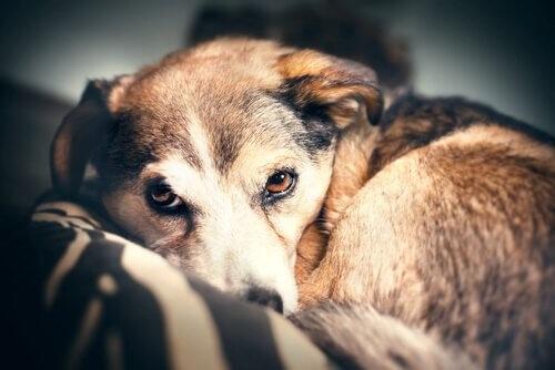 Positive und negative Verstärkung bei der Erziehung deines Haustiers
