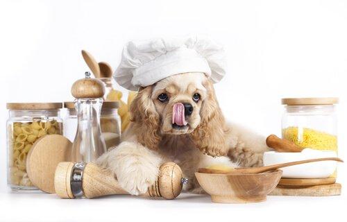 Hier ist der Hund der Koch
