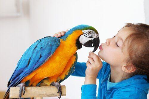 Kind mit Papagei