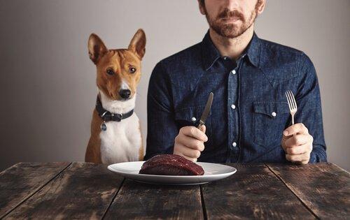 Wie wichtig sind Proteine für Hunde?