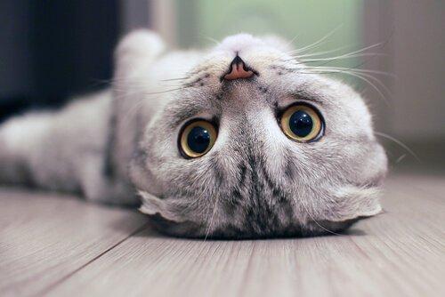 Pupillen bei Katzen