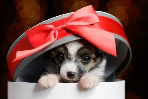 Haustier als Geschenk: 4 Tipps, die du beachten solltest