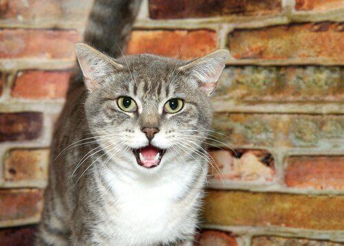 Seltsames Katzenverhalten: Starren und offenes Maul