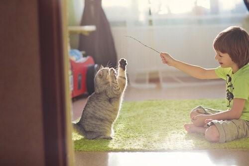 Mit deiner Katze spielen - wertvolle Tipps