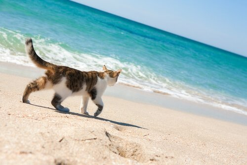 Gibt es Strände für Katzen?