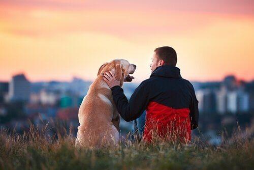 5 rührende Geschichten über die Treue der Hunde