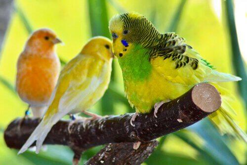 Vogelarten, die sich als Haustiere eignen