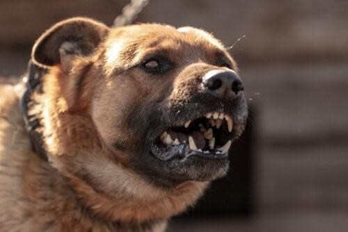 Verschiedene Gründe, warum Hunde angreifen könnten