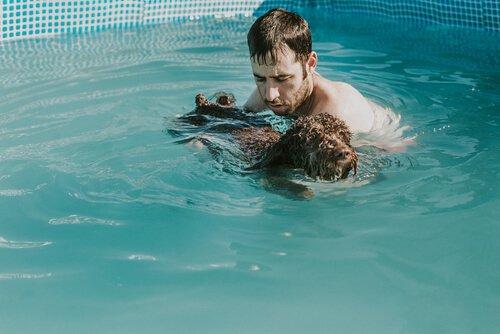 Welpen im Pool schwimmen lernen