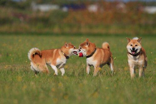 Wie oft muss ein Hund raus zum Gassi?