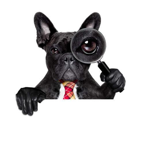 Wissenschaftliche Kuriositäten über Hunde
