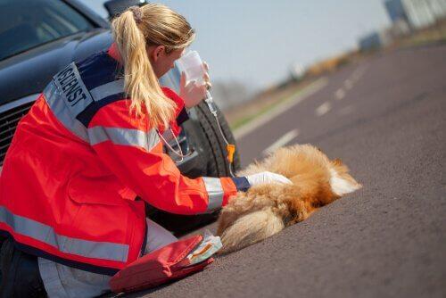 Unfälle bei Haustieren im Verkehr