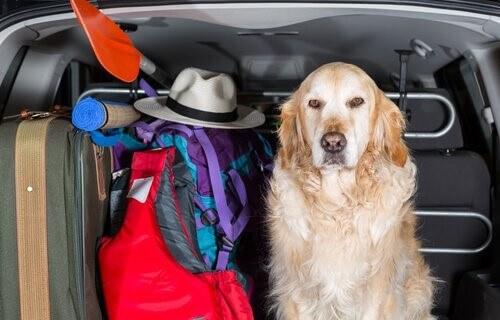 Hundedecken fürs Auto