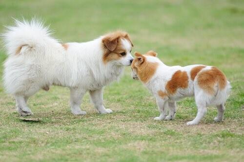 Begrüßung unter Hunden: Alles Wissenswerte