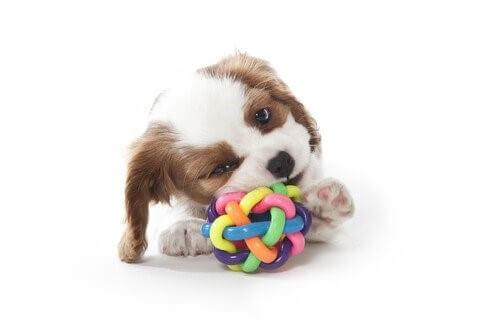 Beißspielzeug für deinen Hund aussuchen - 4 Tipps
