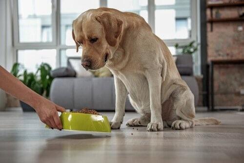 Hat dein Haustier einen hohen Cholesterinspiegel?
