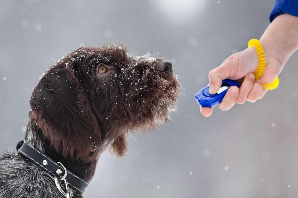 Clicker-Hund