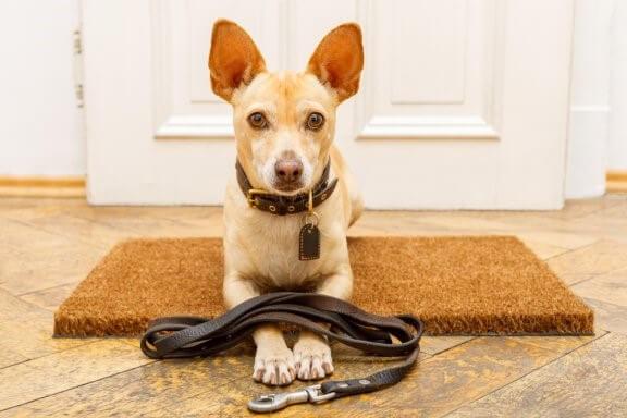 7 Fehler bei der Erziehung von Hunden
