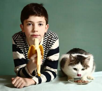 Welche Früchte darf deine Katze fressen?